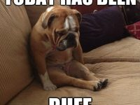 Dog Memes dog-memes-ruff-day-200x150 When your dog had a worse day than you... Dog Memes  ruff day image dog memes