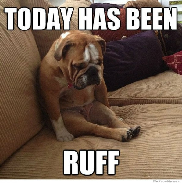 Dog Memes dog-memes-ruff-day When your dog had a worse day than you... Dog Memes  ruff day image dog memes