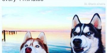 Dog Memes dog-memes-selfietime-360x180 Every Single Time... Dog Memes  vacation selfie image dogmemes