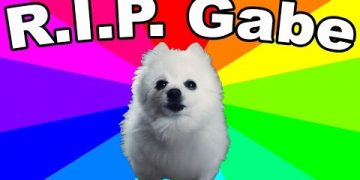 Dog Memes f9f8e9fd71f90fea568d64a617b6c7a1-360x180 Rest In Peace Gabe! So sad.. Pets  story gabe the dog gabe dog memes