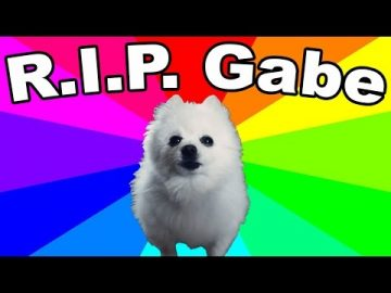 Dog Memes f9f8e9fd71f90fea568d64a617b6c7a1-360x270 Rest In Peace Gabe! So sad.. Pets  story gabe the dog gabe dog memes