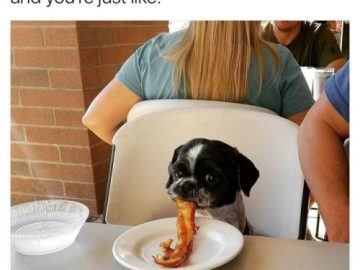 Dog Memes tumblr_olnhgxDcnf1ul07vlo1_500-360x270 Photo Dogs  Photo