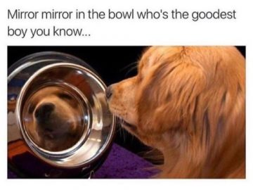 Dog Memes tumblr_olqvblbuiO1ul07vlo1_500-360x270 Photo Dogs  Photo