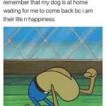 Dog Memes tumblr_olyu6iDelO1ul07vlo1_500-150x150 Photo Dogs  Photo