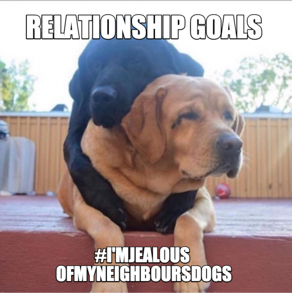 Dog Memes ce3175680dea67b9444e226cfc96d1f4_readyimage_1479-1 When your neighbours dogs love life is better than yours Dog Memes  relationshipgoals Meme dogmemes dog memes