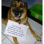 Dog Memes tumblr_om4b8clzEY1ul07vlo1_500-150x150 Photo Dogs  Photo