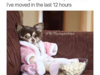 Dog Memes tumblr_omhlvz8mOr1ul07vlo1_500-200x150 Photo Dogs  Photo