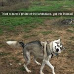 Dog Memes tumblr_ommsogRyuT1ul07vlo1_500-150x150 Photo Dogs  Photo