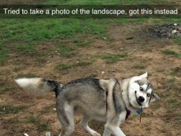 Dog Memes tumblr_ommsogRyuT1ul07vlo1_500-360x270 Kodak moment for sure! Dogs  sure moment Kodak