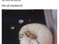 Dog Memes tumblr_omxnll5QZq1ul07vlo1_500-200x150 Photo Dogs  Photo