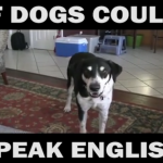 Dog Memes Screen-Shot-2017-04-15-at-9.58.56-AM-150x150 Funniest dog voice over! If dogs could talk haha :) Dog Memes  voiceover video funny