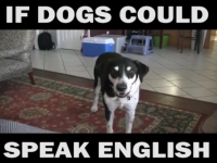 Dog Memes Screen-Shot-2017-04-15-at-9.58.56-AM-200x150 Funniest dog voice over! If dogs could talk haha :) Dog Memes  voiceover video funny