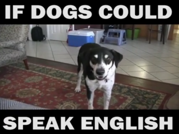 Dog Memes Screen-Shot-2017-04-15-at-9.58.56-AM-360x270 Funniest dog voice over! If dogs could talk haha :) Dog Memes  voiceover video funny