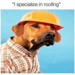 Dog Memes tumblr_opur85x1Yb1vi3bo0o1_500-150x150 Photo Dogs  Photo