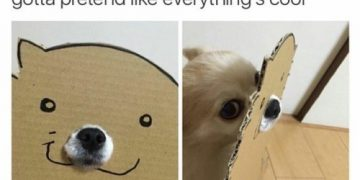 Dog Memes tumblr_osp7x3eytI1vi3bo0o1_500-360x180 Photo Dogs  Photo