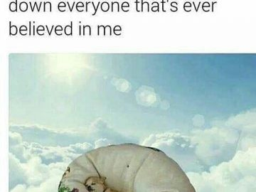 Dog Memes tumblr_osqxdeIerV1vi3bo0o1_500-360x270 Not a single _____ was given that day... Dogs  Photo