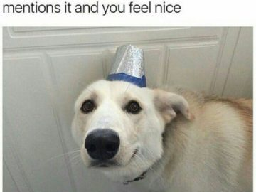Dog Memes tumblr_ostyddcEWC1vi3bo0o1_500-360x270 The feels from that smile Dogs  Photo